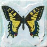 <h5>Monarch</h5><p>Enter your Description </p>